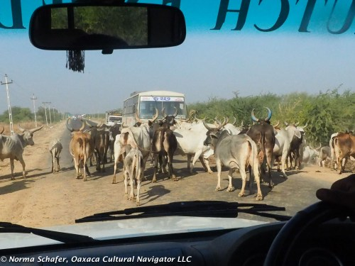 Traffic jam on the way to the Great Rann of Kutch