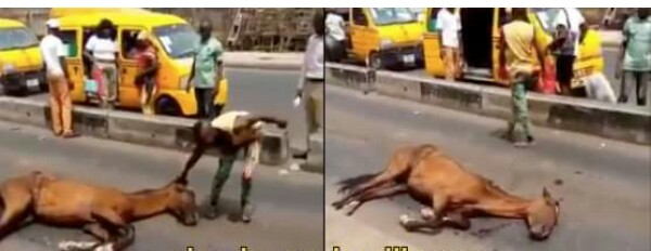 Image result for Tired horse collapses after conveying Lagosians for one day (video)