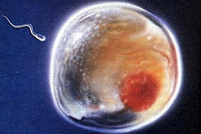 Técnica cria esperma feminino e óvulo masculino