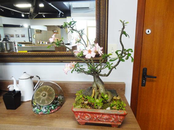 Flor do deserto no Barbeiro3