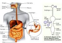 Gangguan saluran pencernaan