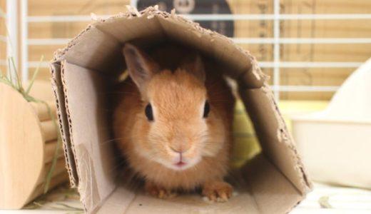 気軽にできるウサギ冬の寒さ対策!朝晩冷える10月から気をつけてあげて!