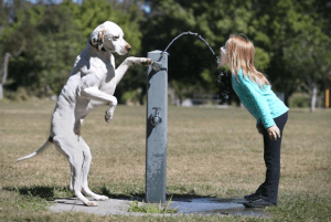 Dog training can teach your dog obedience as well as tricks