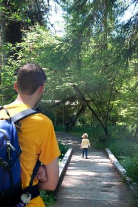 Hoh Rainforest - Moss Trail