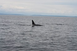 WhaleWatching071220136