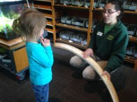 She actually explored the educational portion of the Zoonasium. She learned all about tusks and fossils - SO COOL.