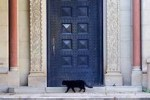 Feral black cat stalks theCollege Administration'sfront door.