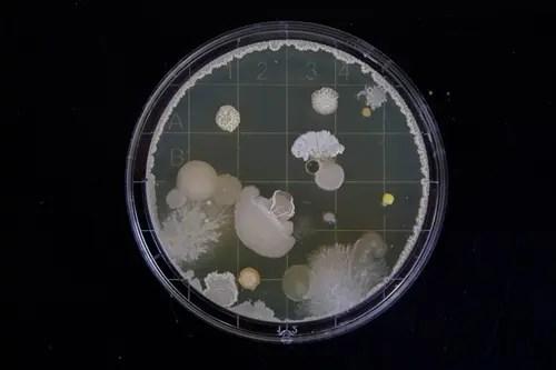 特殊清掃で除菌し、室内のバイ菌・害虫が及ぼす健康被害から守るサービス トリプルエス 大阪