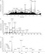 Urine metabolomics and proteomics in prenatal health