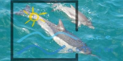 adopta un delfin