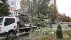 slobozia - copac cazut peste masina- 07