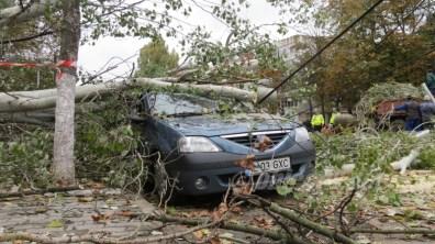 slobozia - copac cazut peste masina- 08