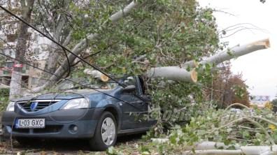 slobozia - copac cazut peste masina- 09
