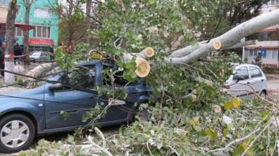slobozia - copac cazut peste masina- 10