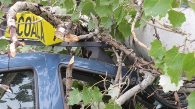 slobozia - copac cazut peste masina- 12