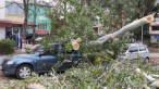 slobozia - copac cazut peste masina- 13