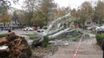 slobozia - copac cazut peste masina- 16