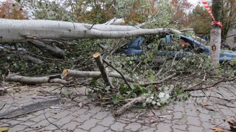 slobozia - copac cazut peste masina- 18