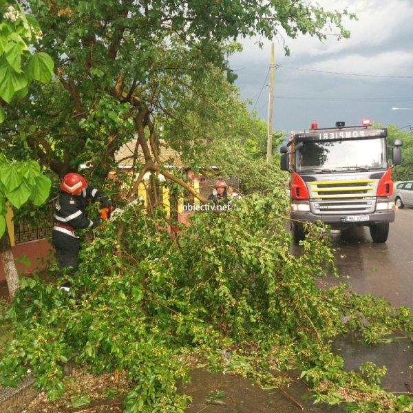 Ialomița: Accident rutier din cauza unui copac căzut pe carosabil