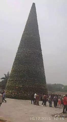 imo-tree