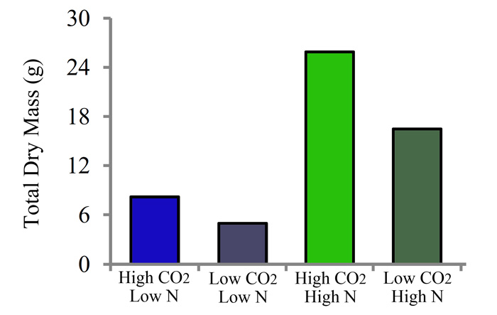 Figure 1. Total dry mass of papaya plants grown in controlled chambers at two different CO2 concentrations (High and Low; 750 and 390 ppm) and two different N treatments (High and Low; 8 mM NO3- or 3 mM NO3-). Adapted from Cruz et al. (2016).