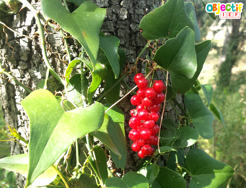 Chasse aux trésors d'automne en forêt