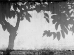 les parties sombres et cachées de soi