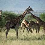 Venez découvrir les paysages extraordinaires et les animaux étonnants de la Tanzanie avec Objectif Tanzania