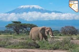 Ascension du Kilimandjaro en Tanzanie - Trekking Safari prive de luxe sur mesure avec Objectif Tanzania