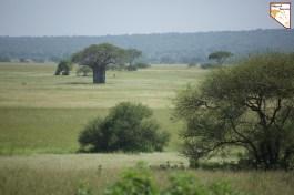 Objectif Tanzania vous presente le safari prive sur mesure africain Tarangire National Park