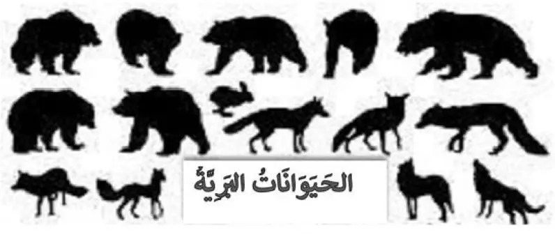 vocabulaire des animaux sauvages en arabe