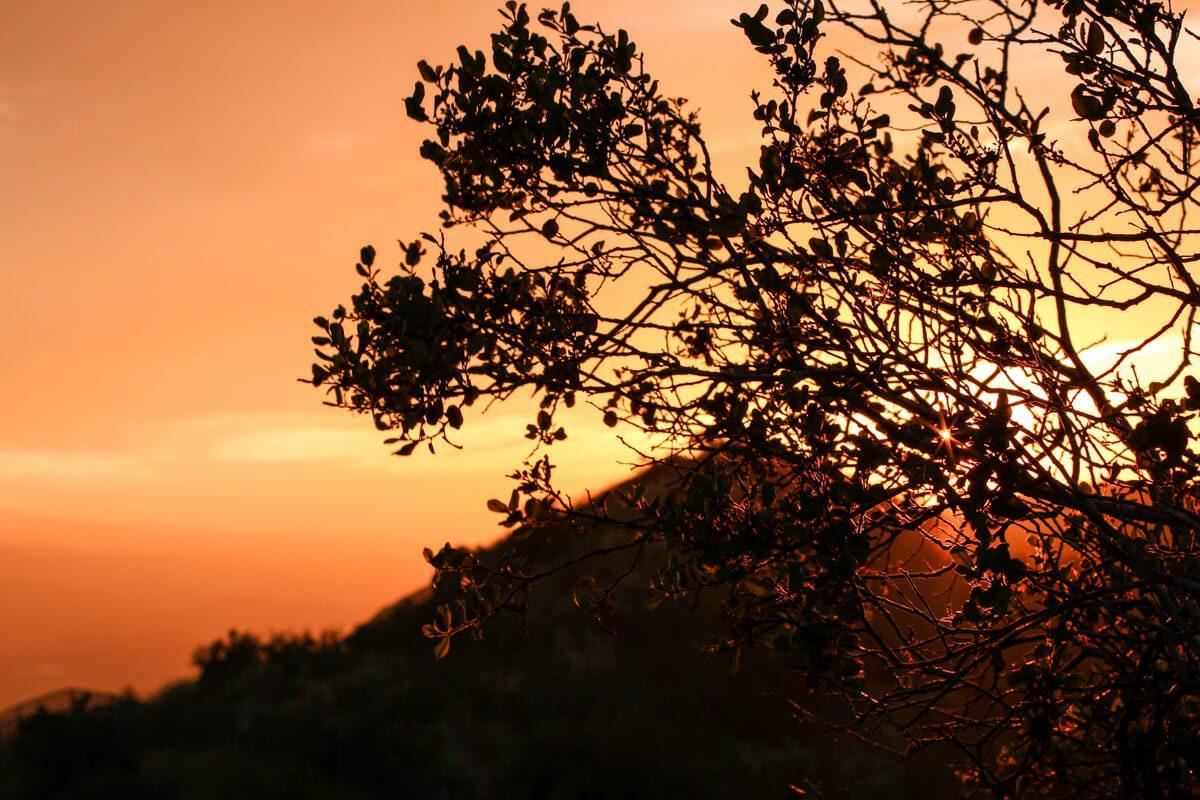 Hollywood Sunset 2