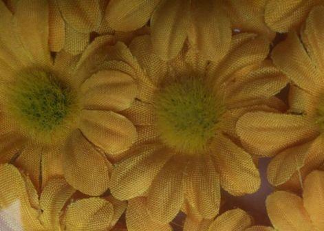 Les fleurs d'origine