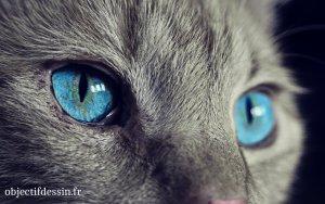 pupille de chat