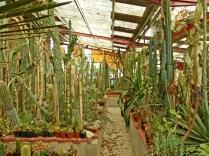 cactus saint astier pinlou (134)