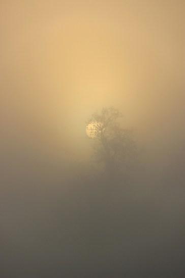 Photo2-orseau