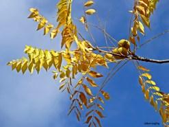 automne 2015 (1)