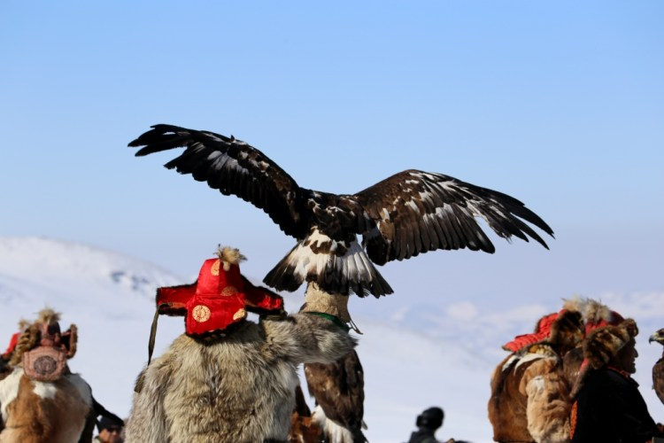 Eagle4