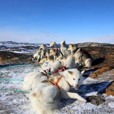 dogsledding8