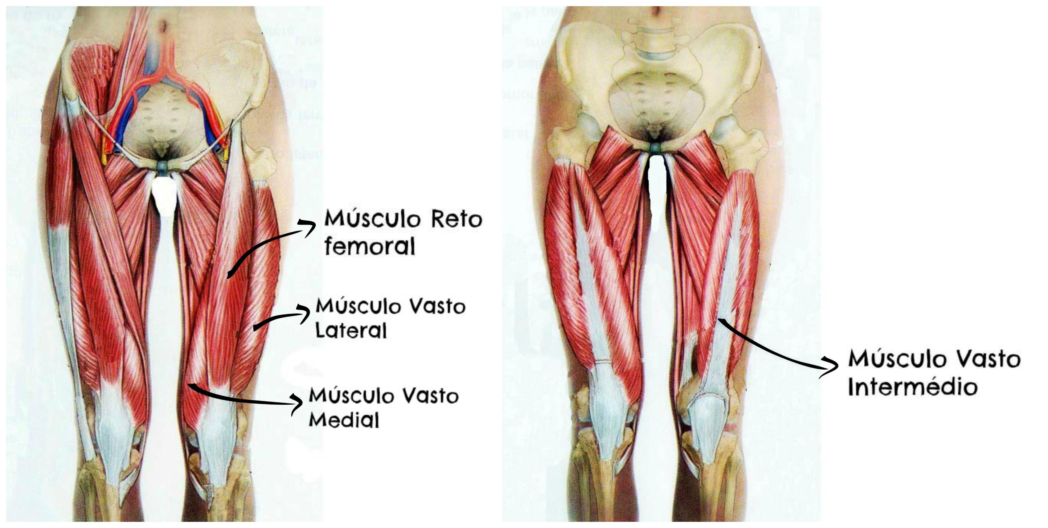 musculo transverso do abdome origem e inserção