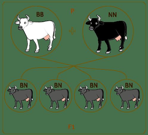 Variaciones Sobre Guardame Las Vacas Pdf