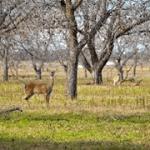 Dohle-walk-deer-web
