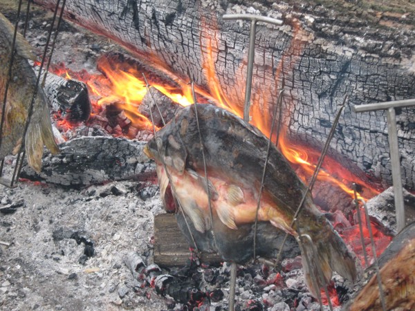 Niska ribe uz snažnu vatru ogromne klade... (Fotografija Miljenko Brezak)