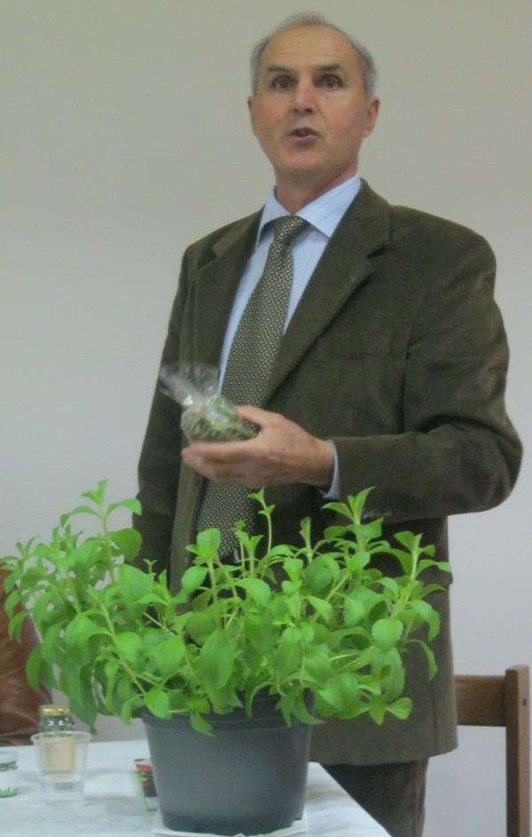 Antun Francetić sa stevijom koju je uzgojio (Snimio Miljenko brezak / Acumen)