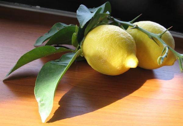 Limun uzgojen na jednome od jadranskih otoka bez posebnih dodataka (Snimila Božica Brkan / Acumen)