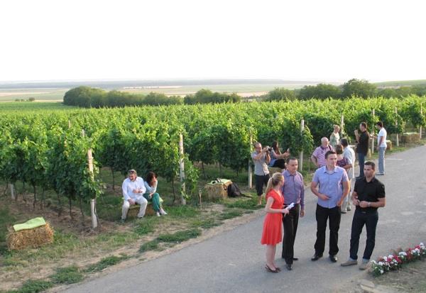 """Neki su gosti imli rijetku priliku upoznati gdje """"rastu"""" vina koja piju (Snimila Božica Brkan)"""