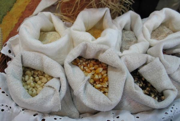 Kukuruzno zrnje i kukuruzno brašno (Snimila Božica Brkan / Oblizeki)