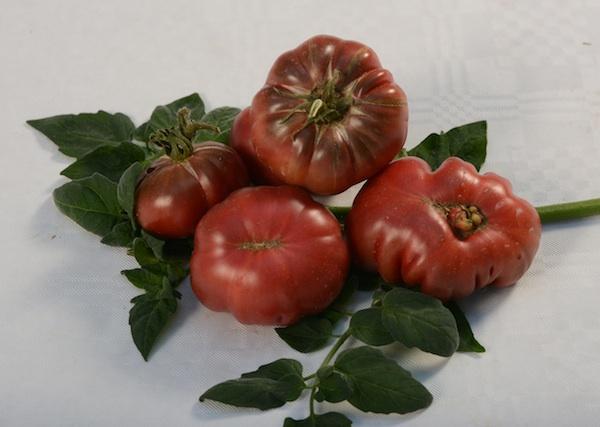 Lijepa, osobito onima koji vole takav starinski oblik rajčice (Fotografija Brkanović / Oblizeki)