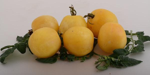 Sve bi izgledom mogla biti prije negoli rajčica (Fotografija Brkanović/ Oblizeki)