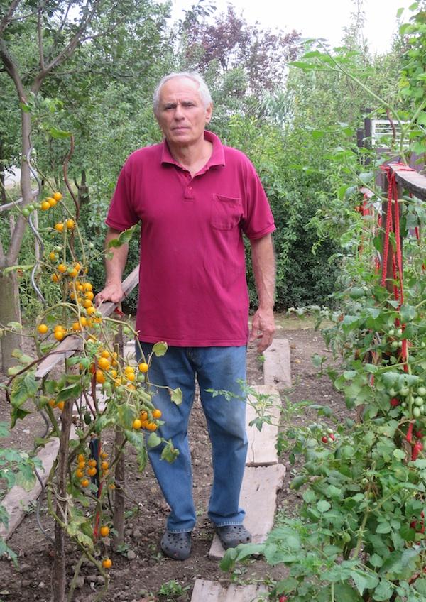 Mićo Brkanović u svom povrtnjaku gdje uzgaja rajčice (Fotografija Božica Brkan / Oblizeki)